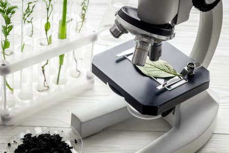 Microscope with plants in biological laboratory. Biological chemistry concept