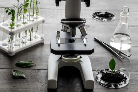 Test floral samples with microscope in biological lab