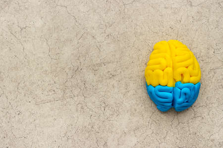 Mental health concept. Human brain of colorfull clay, top view
