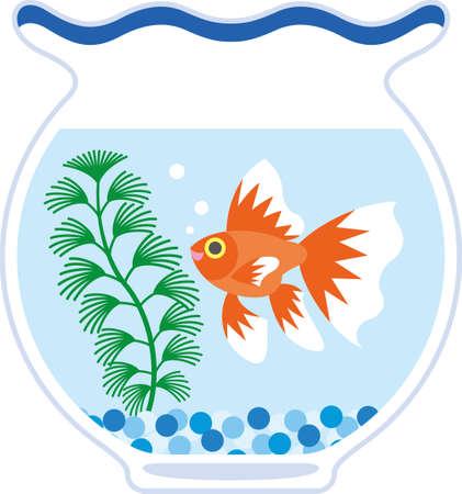 early summer: Goldfish