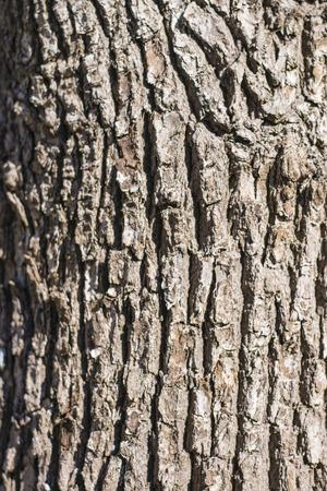 hilt: Camphor tree bark