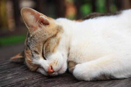 moggy: Sleeping cat