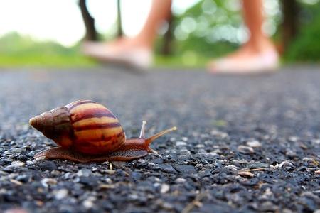 slowly: Mover caracol Foto de archivo