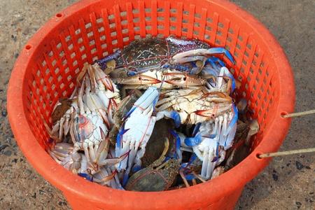 Crabs in basket