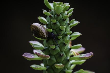 Snail on plant Stok Fotoğraf