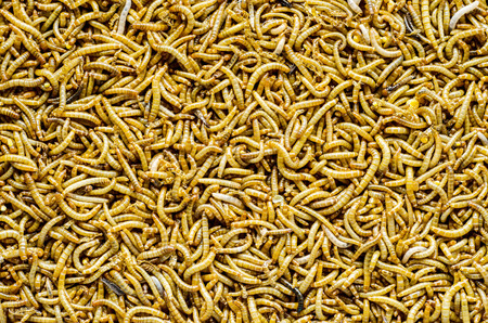 mealworm: A scatter of mealworm larvae, used for feeding birds, reptiles or fish. Stock Photo