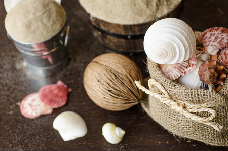 Vacation memories from the sea. Shells on wood background for postcard or Poster photo