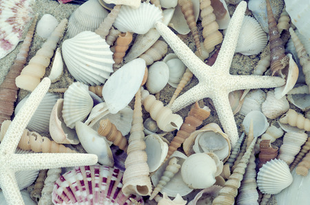 Bunch of seashells on still life. Image can be used as background