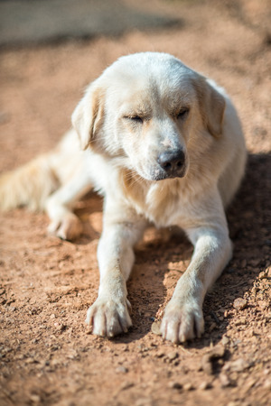 vagrant: Crouching Vagrant dog, very shallow depth of field Stock Photo