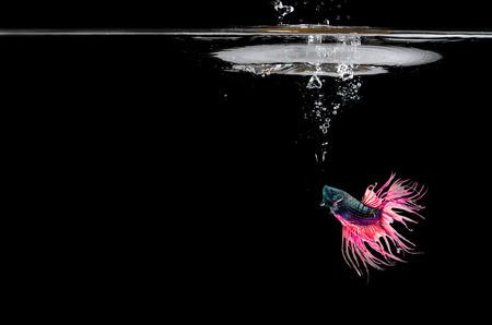 水を得た魚との戦い。黒い背景の前で泳いでいます。