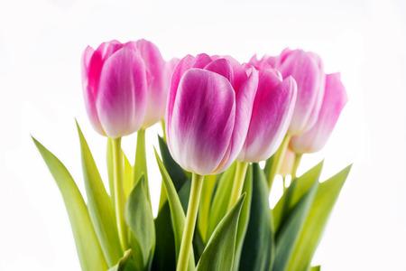 tulips isolated on white background: Tulips. pink flowers isolated on a white background Stock Photo
