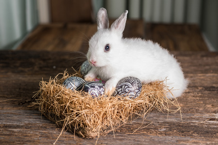 Close up of  Cute white rabbit with Easter egg in nest  ,Wood Background photo