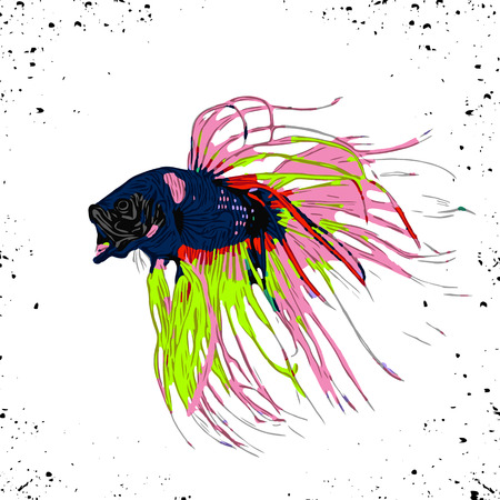 Colorful Betta Fish Vector Illustration. Siamese Fighting Fish. Betta Splendens, isolated on white background Ilustração