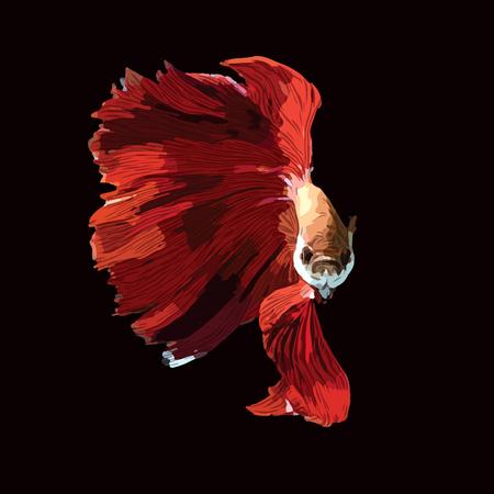 red Betta Fish Vector Illustration. Siamese Fighting Fish. Betta Splendens, isolated on black background