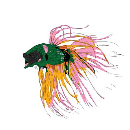 Ilustración colorida del vector de los pescados de Betta. Pez luchador siamés. Betta Splendens, aislado sobre fondo blanco.