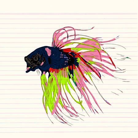 Colorful Betta Fish Vector Illustration. Siamese Fighting Fish. Betta Splendens, isolated on white background Ilustração