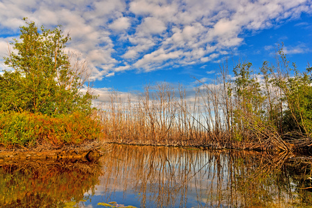 The dry tree reflects the water in the swamp under the blue sky and the white cloud in the eveing.