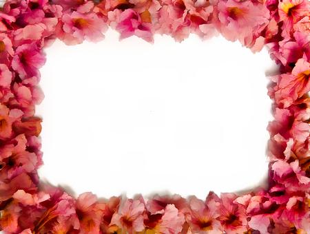 Beautiful Blur Pink Trumpet Flower Frame For Valentine Festival ...