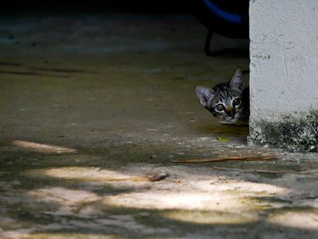 Little tabby cat kitten sneaky peak behind the wall corner