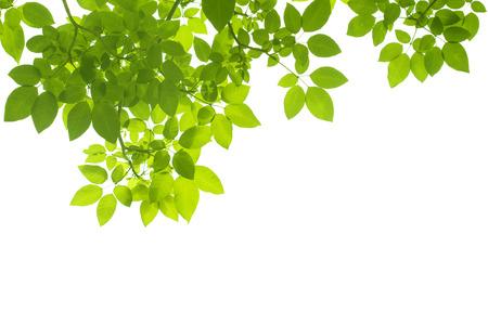 feuille arbre: Arri�re-plan de feuilles Banque d'images