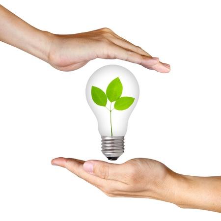 bulb: Pflanzen Sie im inneren Gl�hbirne zwischen zwei H�nden Lizenzfreie Bilder