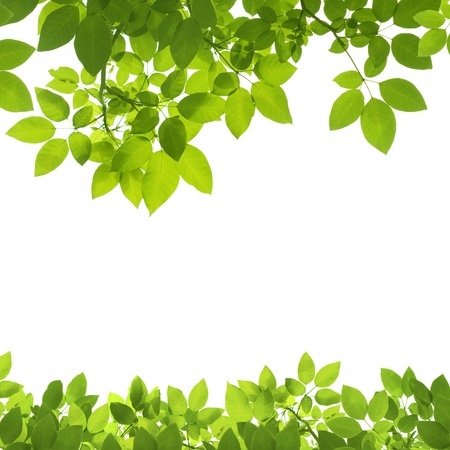 Green Leaves Border on white background 版權商用圖片 - 8580687