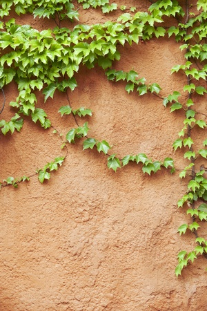 green wall: yellow concrete wall with plant