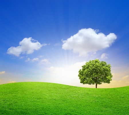 oak tree: Green Field with big tree and blue sky