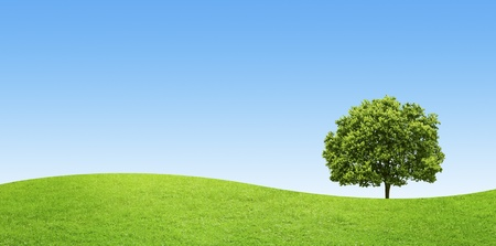panorama of green field with a big tree on blue sky background photo