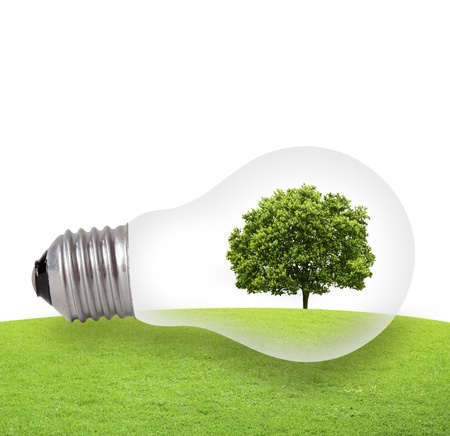 solar power plant: Eco concept, green tree growing in a bulb