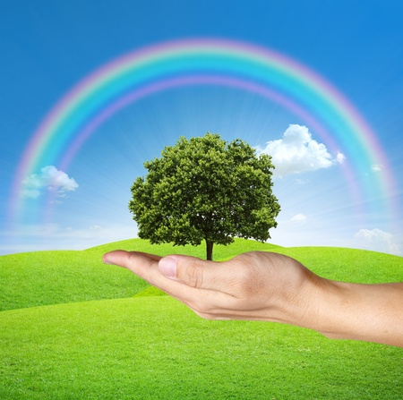a Tree in human hands with blue sky and rainbow