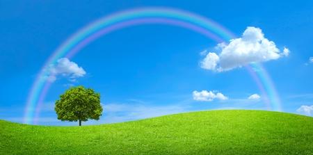 Panorama der grünen Wiese mit einem großen Baum und Regenbogen in blauer Himmel Standard-Bild