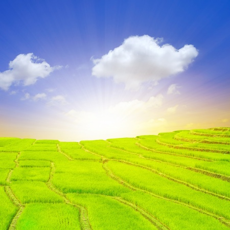 terrace rice fields with sunrise photo