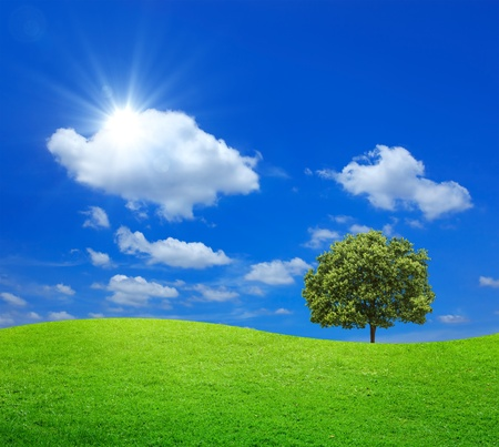 Green Field with big tree and blue sky Stok Fotoğraf - 10651555