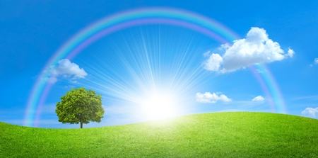 panorama of green field with a big tree and rainbow in blue sky Stock Photo
