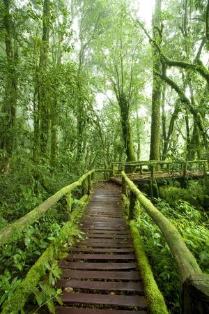 Beautiful rain forest at doi inthanon national park, Thailand  photo