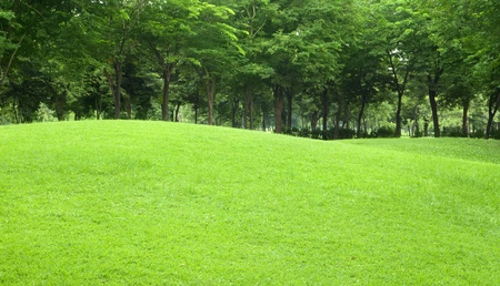 sloping: beautiful sloping backyard with vibrant green grass and tree in the background