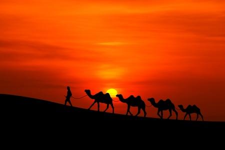 camello: caravana de camellos silueta con la puesta del sol