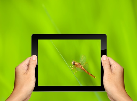 capturing dragonfly with tablet computer Stock Photo - 15145002