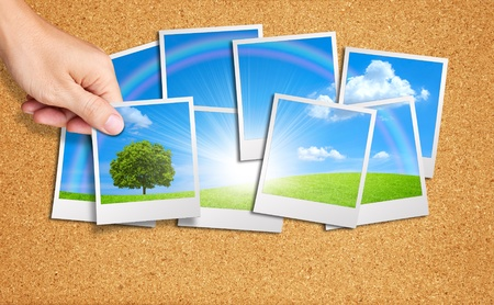Hand add tree image into a group of nature images on cork board Stok Fotoğraf