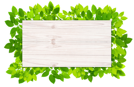 transparent background: Plank Wood Background with green leaves frame