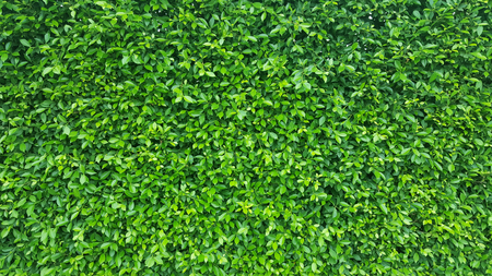 Green Leaves background Stok Fotoğraf