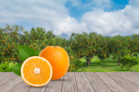 oranges on the wooden table with blurred background of orange orchard