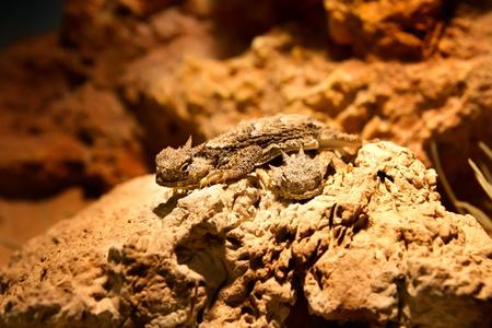 globalwarming: desert lizard