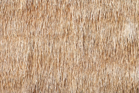 thatched roof: hay or dry grass background Stock Photo