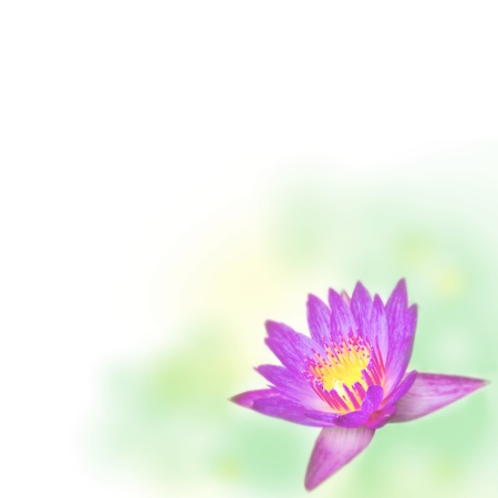 lotus flower design expandable blank template border photo