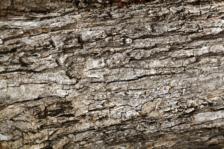 wood bark outer surface background, cracked, grunge, weathered, very old horizontal format photo