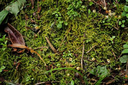 adventurous: adventurous green nature background