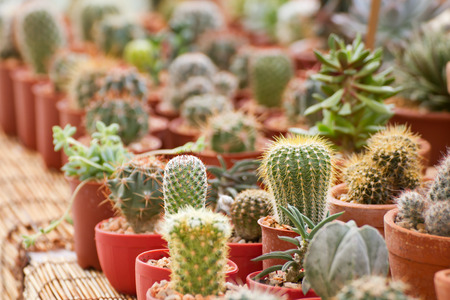 material flower: cactus in planting pot Stock Photo