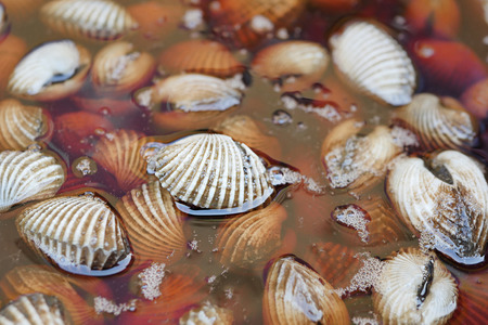 fresh, raw cockle in water